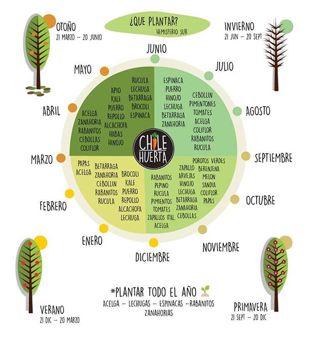 Qué plantar y cuándo? – Fundación Mi Parque